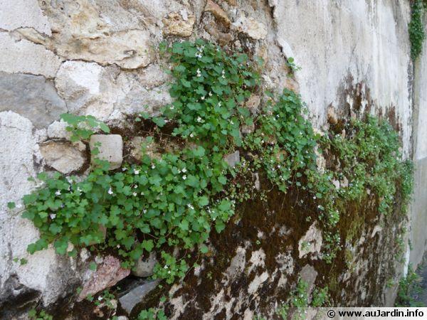 Les plantes envahissent la ville, le naturel reprend le dessus...
