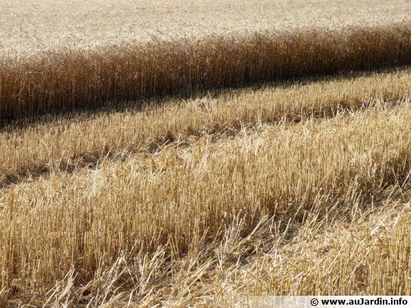 L'agriculture intensive contribue au lessivage des sols
