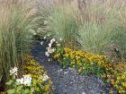 Des plantes pour souligner une allée