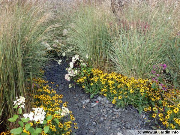 Une allée composée de graminées (Miscanthus sinensis) et de fleurs à la base pour souligner les bords