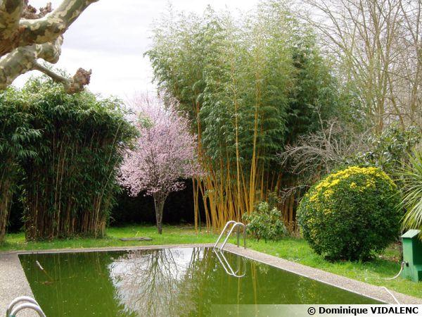Aménagement du pourtour d'une piscine avec des bambous