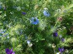 Semer en place les plantes annuelles