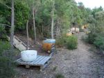 Pour une apiculture durable