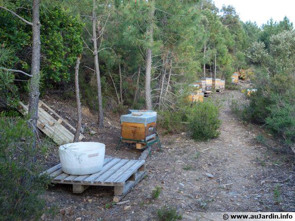 Pour une apiculture durable...