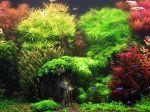 Un aquarium verdoyant