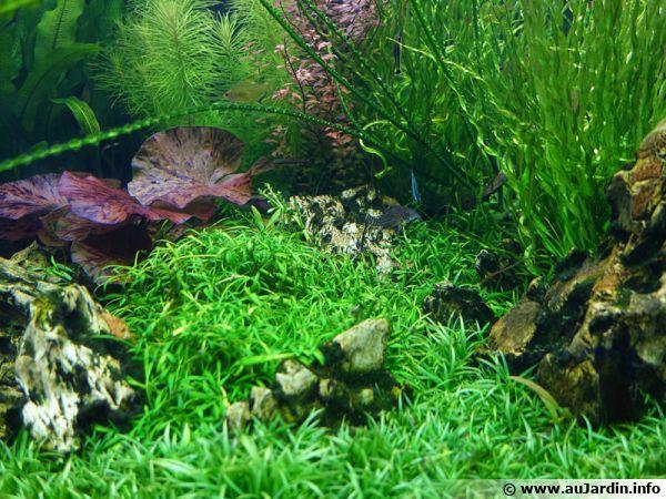 Un aquarium verdoyant avec quelques roches apparentes