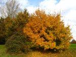 Faire un compost de feuilles mortes