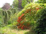 Savoir où planter ses arbustes