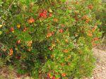 Les plantes xérophytes