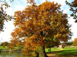 Le blues de l'automne !