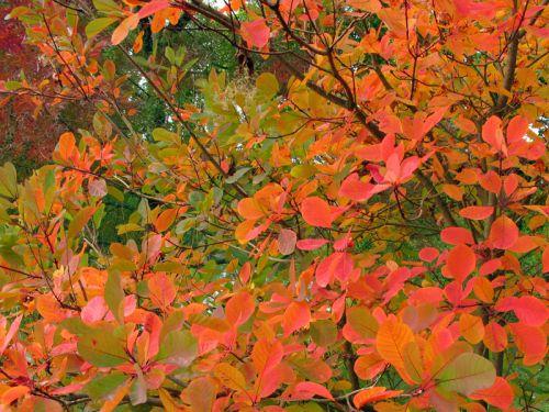 Conserver les plus belles feuilles d 39 automne - Jardin sauvage st roch l achigan colombes ...