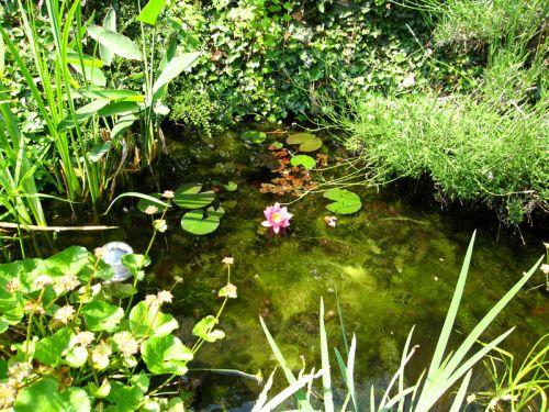 Trucs pour la filtration du bassin - Quel arbre pour petit jardin ...