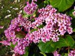 Des vivaces fleuries même en hiver