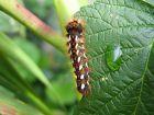 Accueillir la biodiversité en août