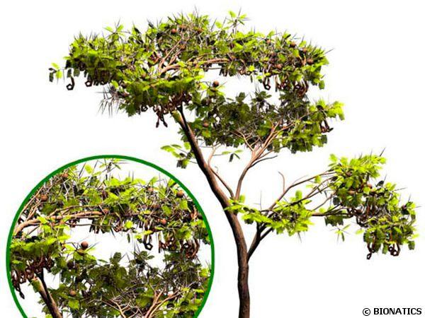 Acacia ayant poussé virtuellement