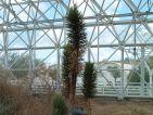 Biosphère 2, cactus
