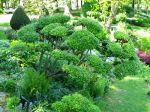 Les bonsaïs de jardin
