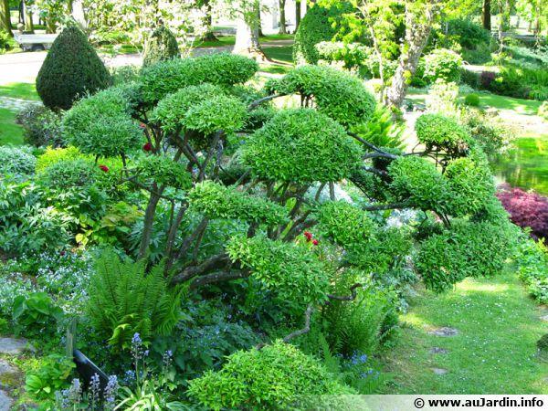 Les bonsa s de jardin Jardin japonais bonsai