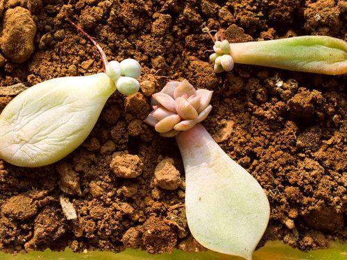 Le bouturage des plantes succulentes for Plante verte exterieure