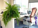 Des plantes pour le bureau