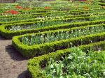 Réaliser des bordures végétales