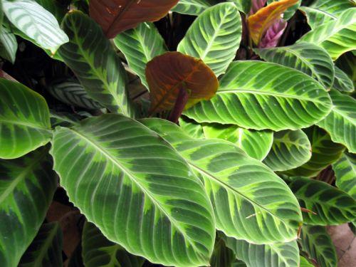 Plantes adapt es un int rieur peu lumineux for Maladie des plantes vertes d interieur