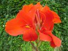 10 fleurs rouges pour le jardin