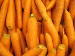 Réussir la culture de la carotte primeur