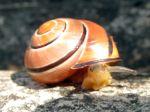Les gastéropodes, escargots et limaces