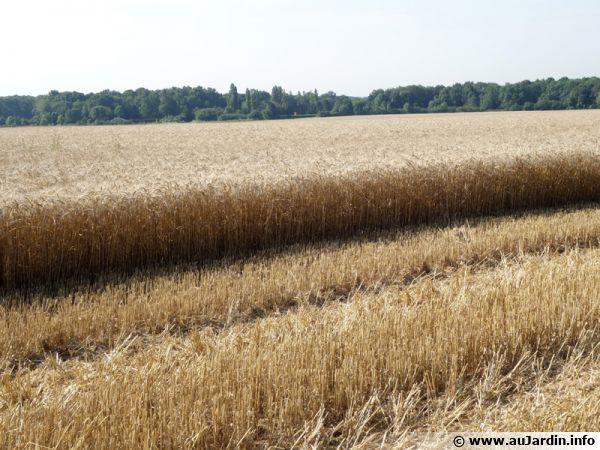 L'agriculture intensive responsable du déséquilibre des sols et aggrave certains phénomènes comme les inondations