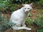 Éloigner les chats des plantations
