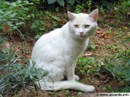 Comment chasser les chats de notre jardin for Anti chat jardin