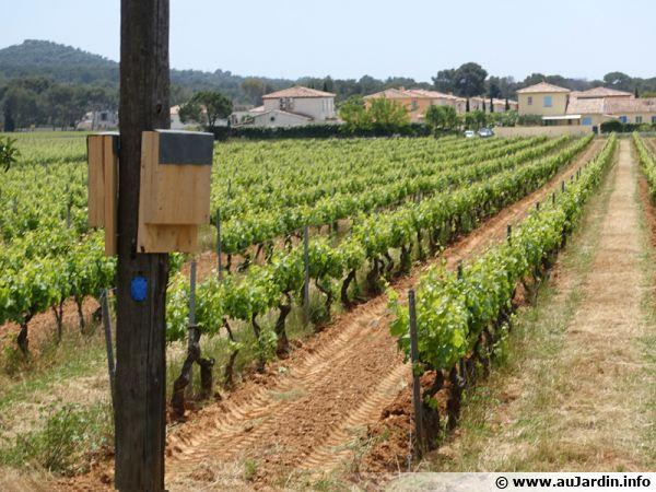 Des abris pour chauves-souris installés dans les vignobles du Var