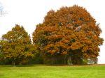 Choisir le chêne adapté à son jardin