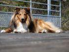 Avoir un chien, le secret du bonheur et d'une meilleure santé?