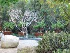 Christian Fournet signe un jardin appelé Nuances, bassin et arbre argenté