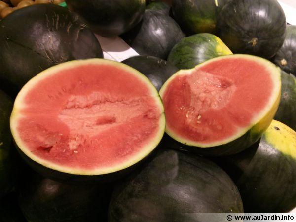 Pastèque, Melon d'eau, Citrullus lanatus