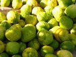 Cédratier, Citrus medica