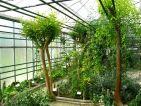 Conservatoire National des Plantes à Parfum, Médicinales, Aromatiques et Industrielles de Milly la forêt