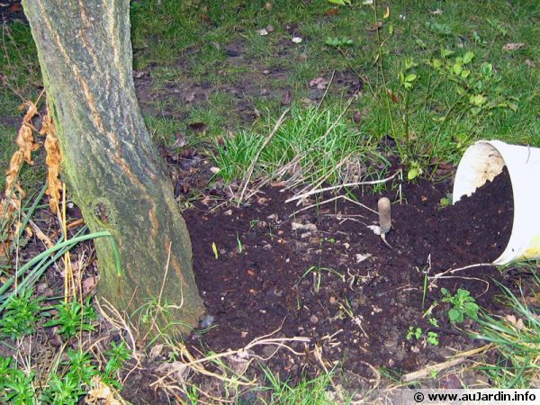 Comment utiliser votre compost? Compost-etaler-600x450