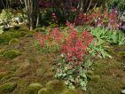 Jardin japonais de Truffaut à Courson 2014, des heuchères et des primevères de Vial