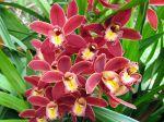 Des orchidées faciles à cultiver