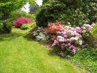 Domaine de Courson, massif de rhododendrons