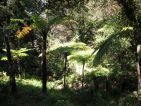 Ambiances avec des fougères au Domaine du Rayol