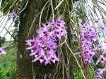 Les plantes épiphytes