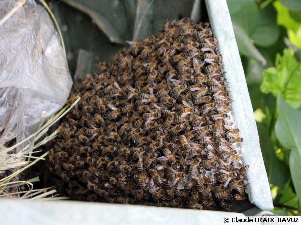 l 39 essaimage des abeilles. Black Bedroom Furniture Sets. Home Design Ideas