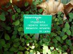 Les étiquettes pour les plantes du jardin