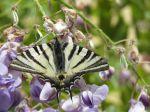 Les insectes au jardin, alliés ou ennemis ?