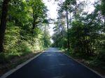 L'industrialisation de nos forêts