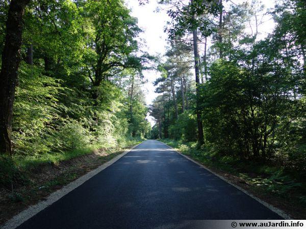 Forêt du centre de la France traversée par une route...